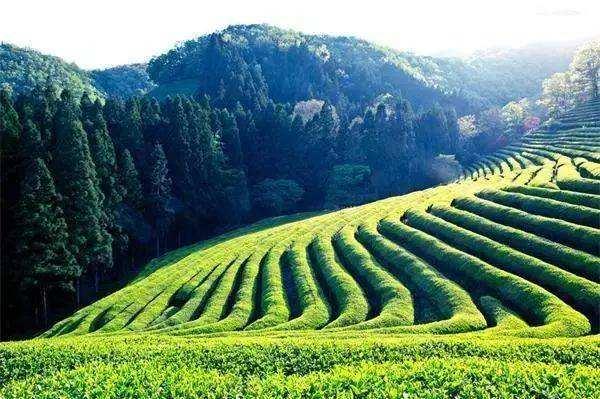 影响有机肥行业发展的问题及机遇