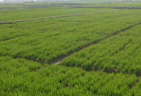 福建:有机肥修复土壤肥力成果显著