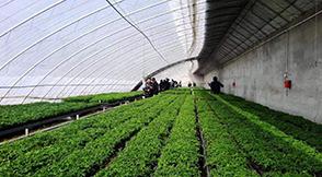 关于对有机肥生产企业给予奖补政策
