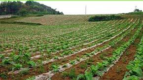 浙江省商品有机肥推广应用成效显著
