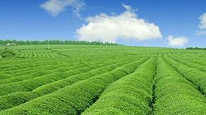 山东莱西打造三循环模式,促进畜禽养殖产业绿色可持续发展