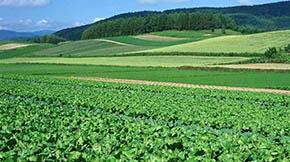 绿色发展引领沾益乡村振兴