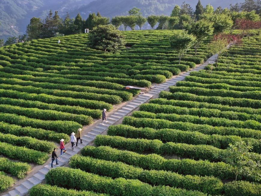 科技赋能 青岛�出农业废弃物资源化利用新路子