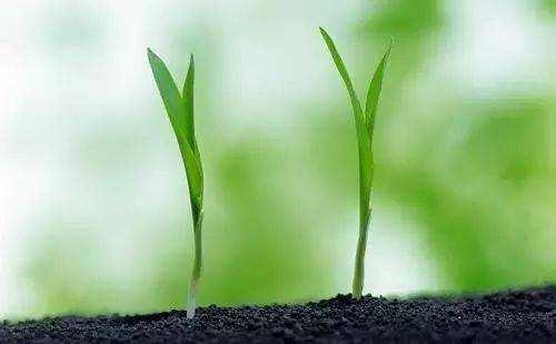 生物有机肥凭什么比一般有机肥卖的贵?