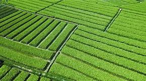 福建大力推广有机肥修复土壤肥力成果显著