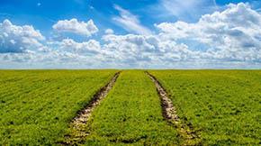 打造生态招牌 发展绿色农业