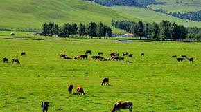 农业部关于进一步加快畜禽粪污资源化利用的政策解析